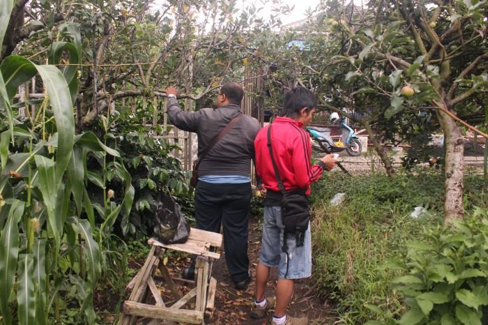 Pengunjung sedang memilih-milih apel di Kebun Lulu