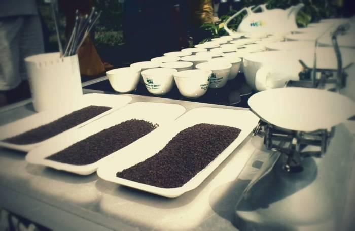 Tarian Kolosal bercerita tentang cara memetik teh diperkebunan teh. Tarian ini diperuntukan para pemetik teh, agar diberi keselamatan saat bekerja dan rezeki yang barokah saat memetik teh di perkebunan teh Wonosari, Lawang.