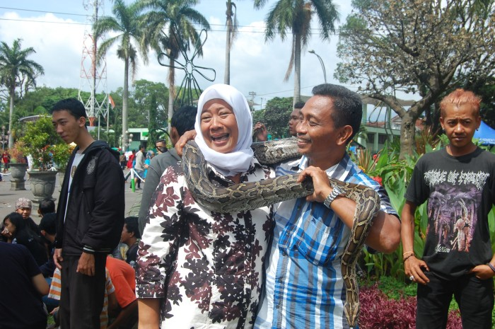 Komunitas lain yang turut meramaikan acara mingguan, yaitu komunitas pecinta Reptil Malang.
